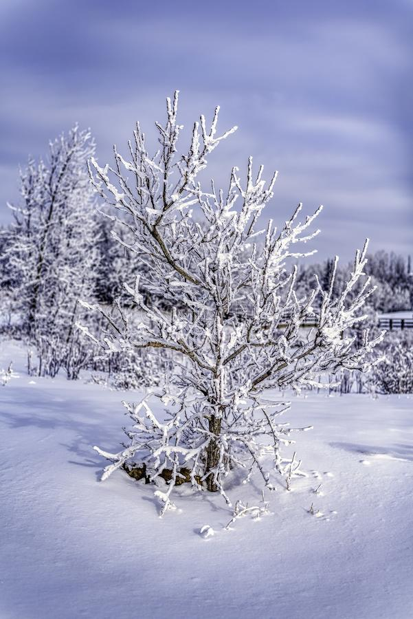 Gorgeous Morning Sun Shining On Tree In Pure White Snow