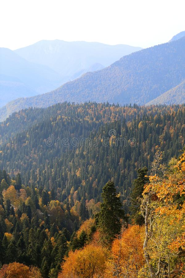 Gorgeous photo of the blue mountains and autumn forest royalty free stock images