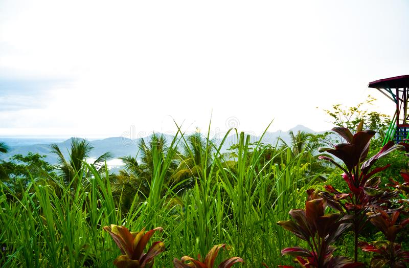 Lush green rain forest tropical jungle with jumping platform in South Eeast Asian morning sunrise stock photography