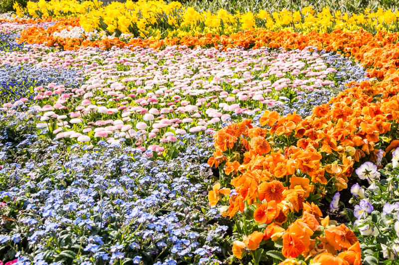 Gorgeous spring flowers stock image