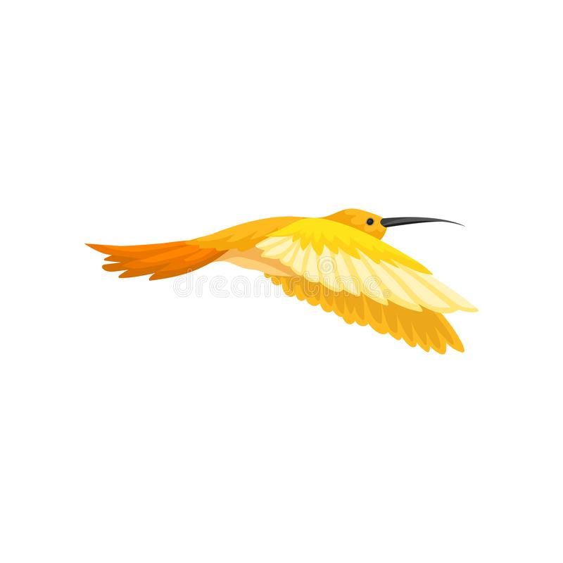 Gorgeous tropical hummingbird with bright yellow-orange feathers. Flying colibri. Small bird with long thin beak. Flat. Gorgeous tropical hummingbird with bright vector illustration