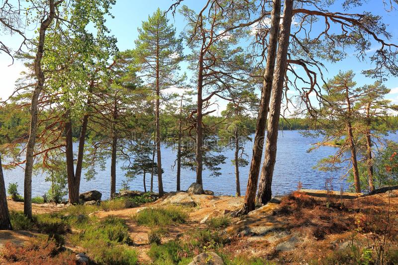 Gorgeous view on lake through tall trees. Beautiful nature backgrounds. Sweden stock image
