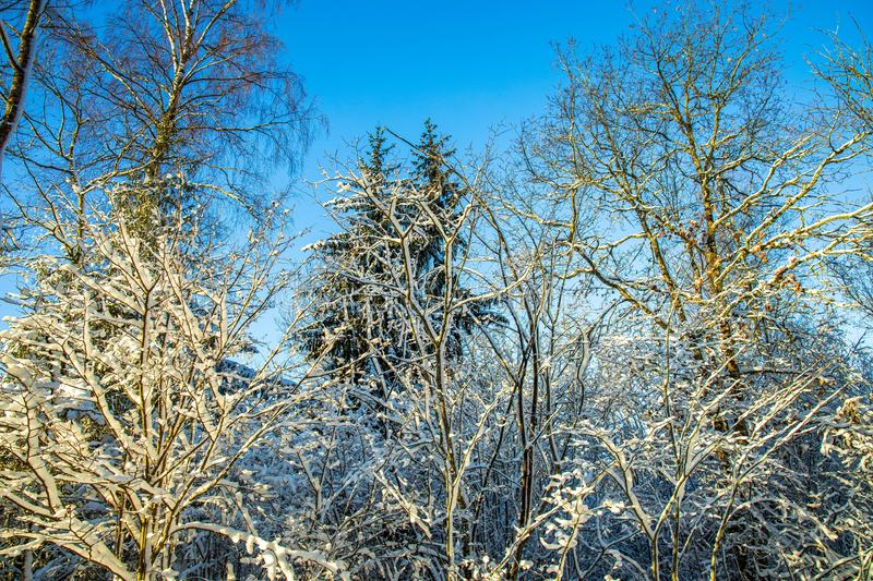 Gorgeous view of snow covered  trees top on blue sky background. Beautiful winter scape view royalty free stock photos