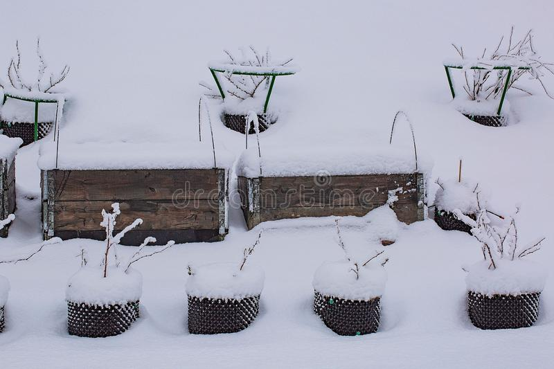 Gorgeous winter view of exterior of a private garden in plastic pots. Strawberry growing in pallet collar covered, with snow. Winter day. Gorgeous nature royalty free stock images