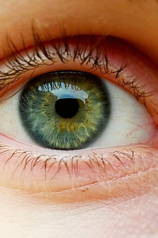 Gorgeoys眼睛 免版税图库摄影