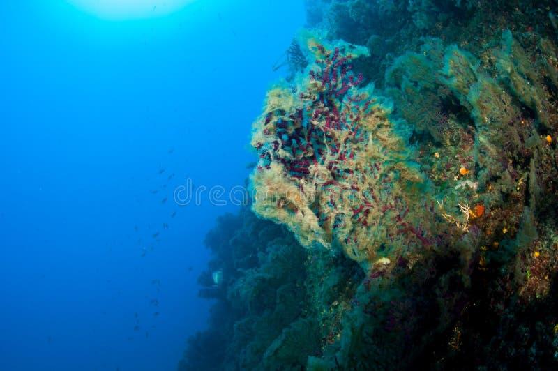 Gorgonian mit Schleim lizenzfreie stockfotografie