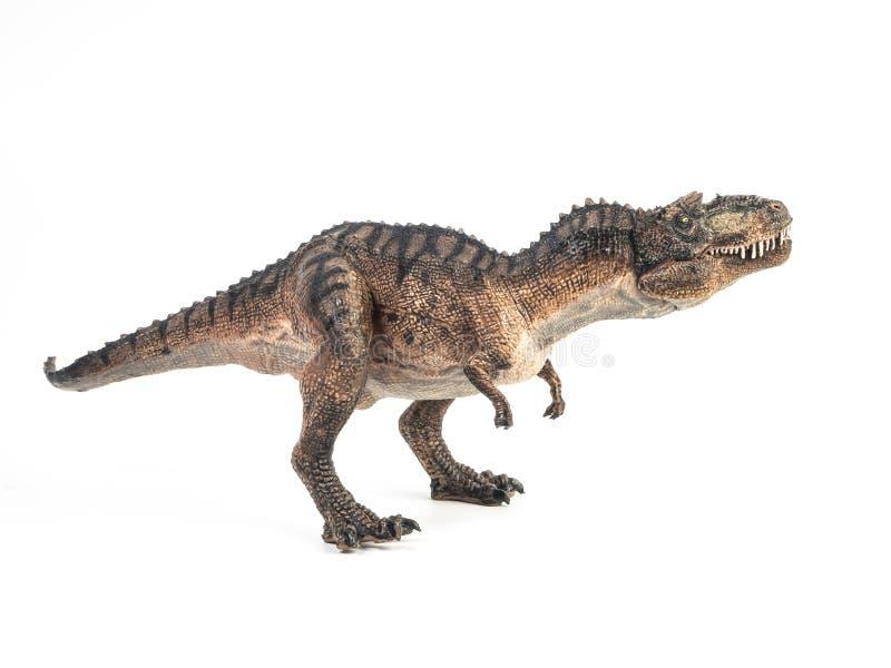 Gorgosaurus Dinosaur su fondo bianco fotografia stock
