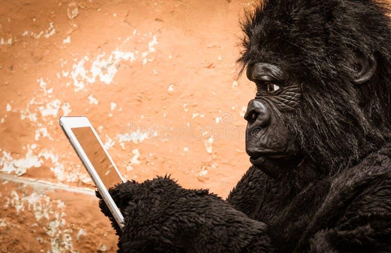 Gorila com tabuleta fotografia de stock