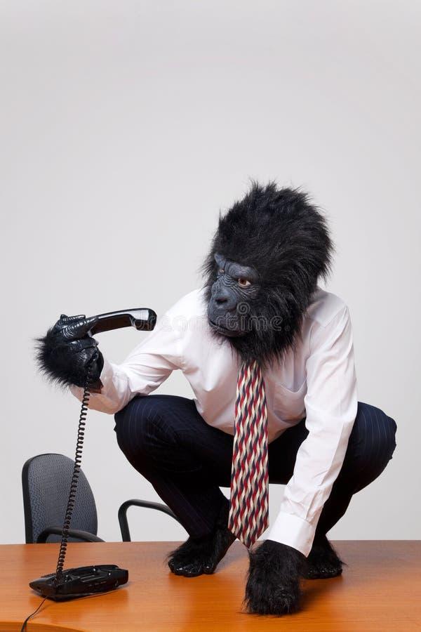Gorila em uma mesa que pegara o telefone. foto de stock royalty free