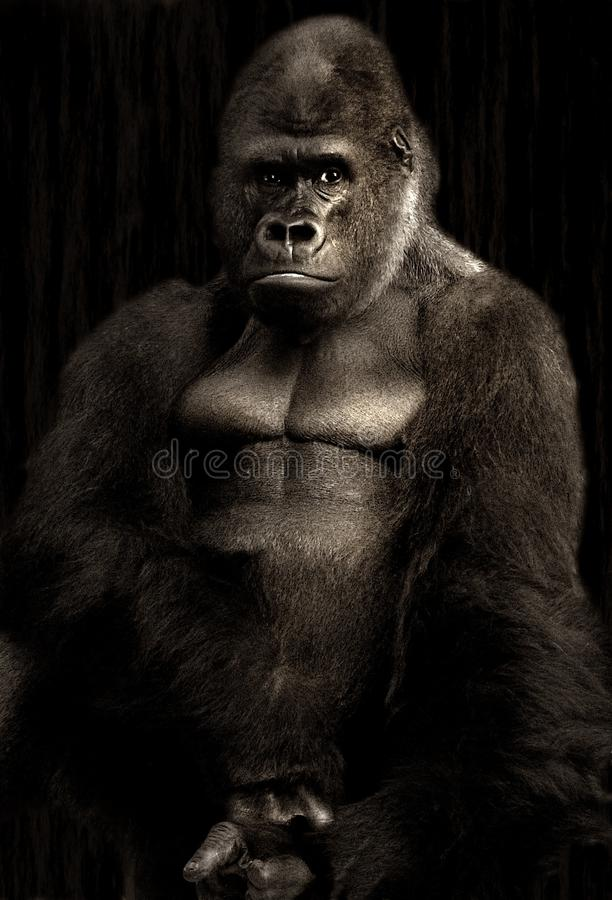 Gorilla Free Public Domain Cc0 Image
