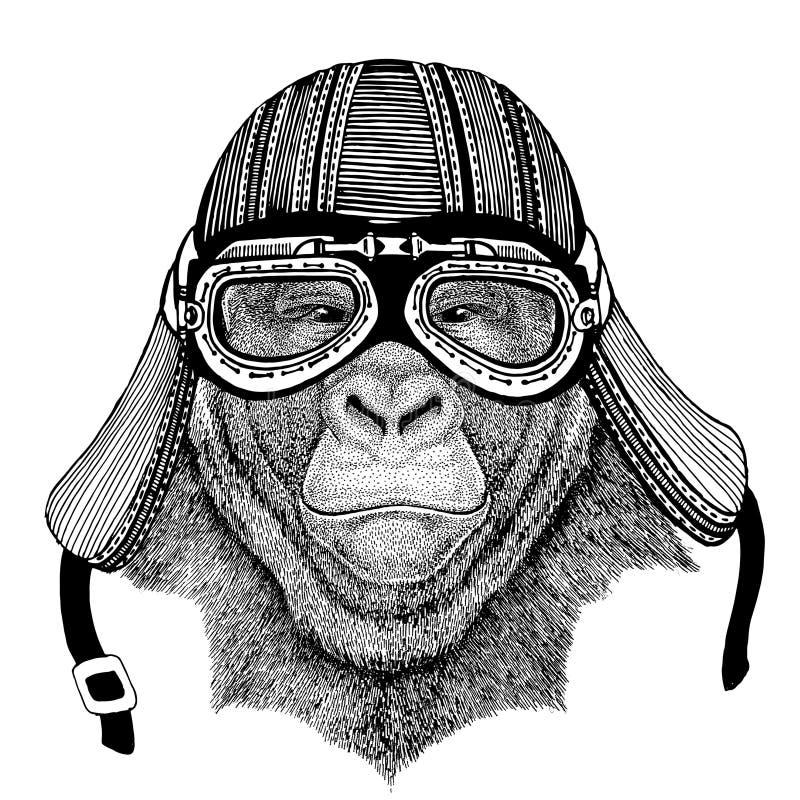 Gorilla apa, dragen bild för apa hand av den djura bärande motorcykelhjälmen för t-skjortan, tatuering, emblem, emblem, logo royaltyfri illustrationer