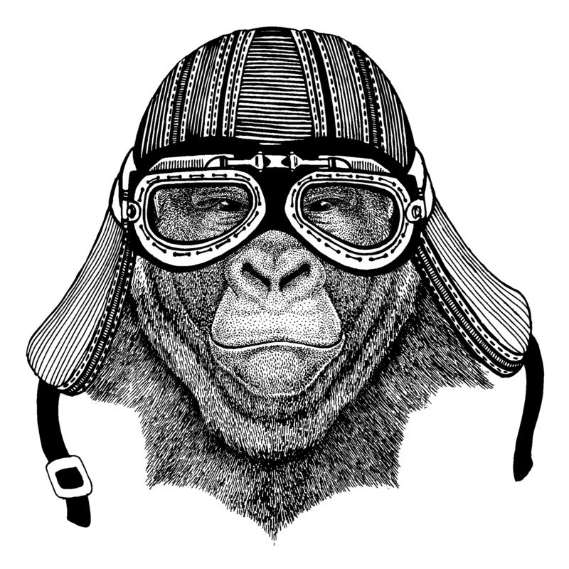 Gorilla apa, för löst hjälm för motorcykel cyklistdjur för apa bärande r vektor illustrationer