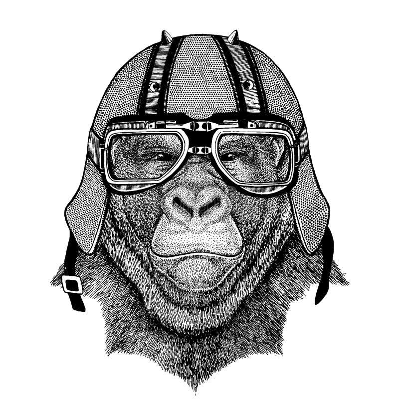 Gorilla apa, apa som bär en motorcykel, aero hjälm Utdragen bild för hand för tatueringen, t-skjorta, emblem, emblem, logo, lapp vektor illustrationer