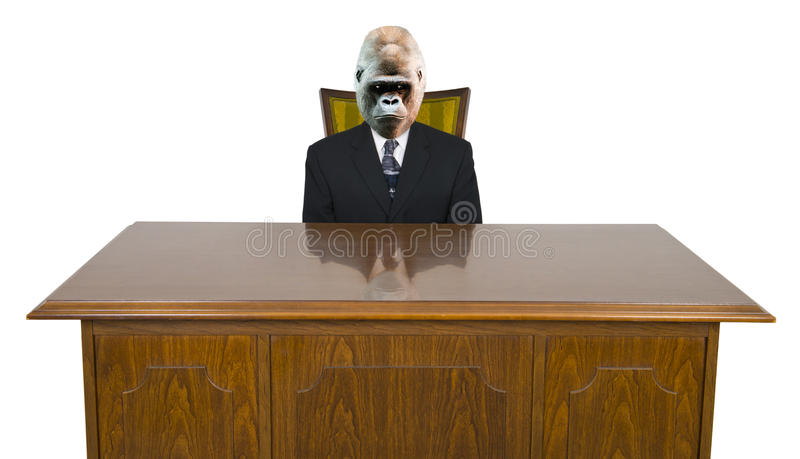 Gorilla Businessman, Business Office Desk Isolated stock photography