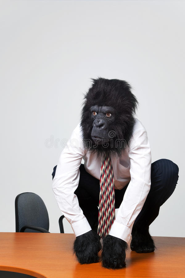 Download Gorilla Businessman In Shirt And Tie Sat On A Desk Stock Image - Image: 12965781