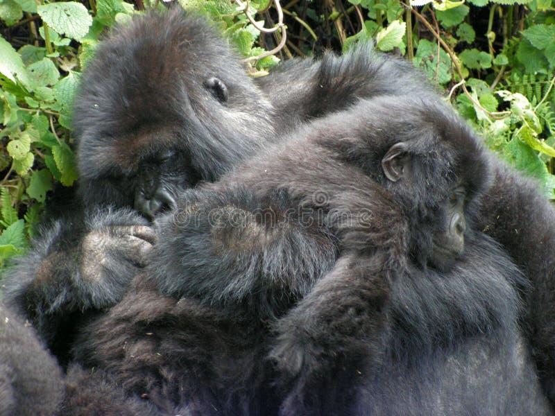 Gorilla en Babygorilla stock foto's