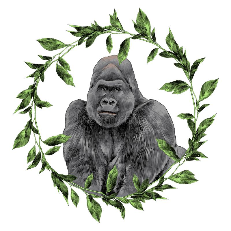 The gorilla in the frame sketch vector graphics. Color picture vector illustration