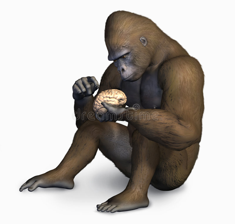 Gorilla Inspecting Human Brain - with clipping path royalty free illustration