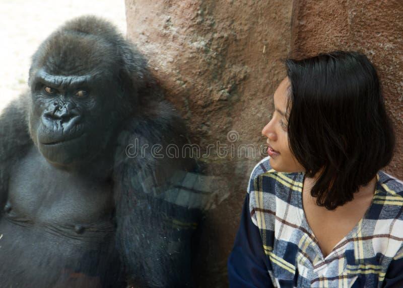 Gorilla met vrouw in Dierentuin royalty-vrije stock afbeelding