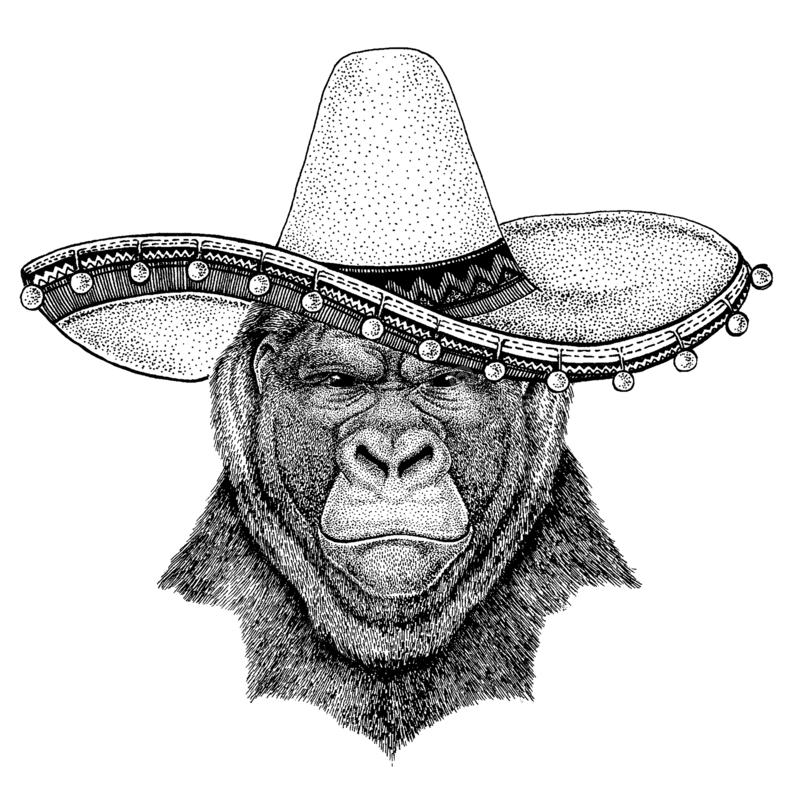 Gorilla, monkey, ape wearing traditional mexican hat Sombrero. Classic headdress, fiesta, party. Gorilla, monkey, ape wearing traditional mexican hat. Classic stock illustration