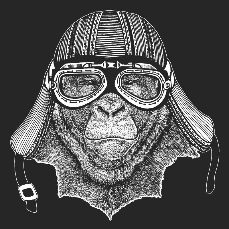 Gorilla, scimmia, scimmia Casco per motocicli Biker royalty illustrazione gratis