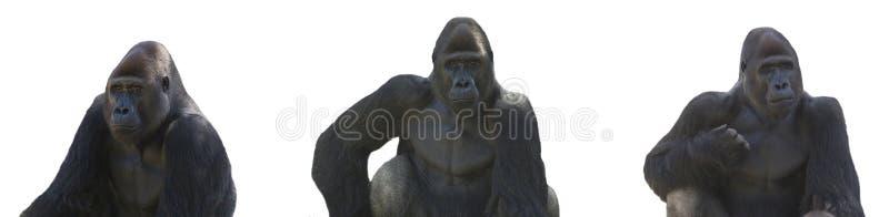 Download Gorilla series stock image. Image of background, black - 6795343