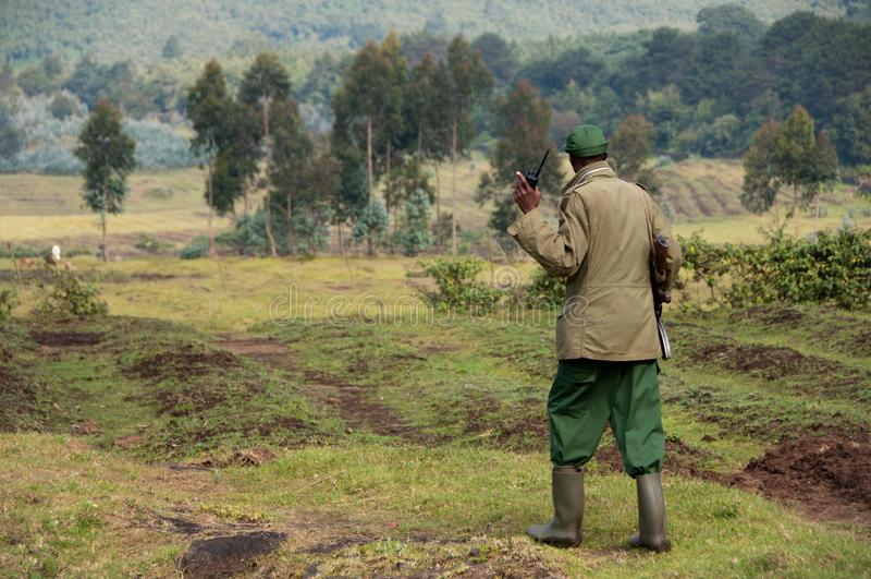Gorilla Trekking Guide ruandese fotografia stock libera da diritti