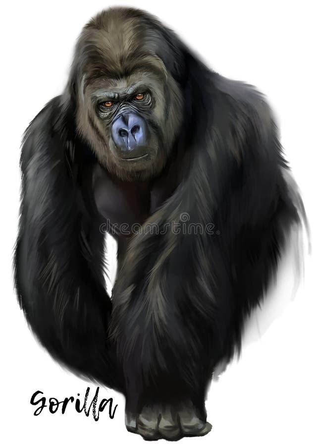 Gorilla watercolor painting vector illustration