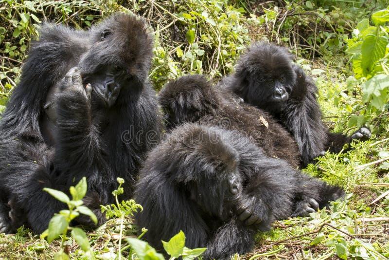 Gorillagruppe stockbilder