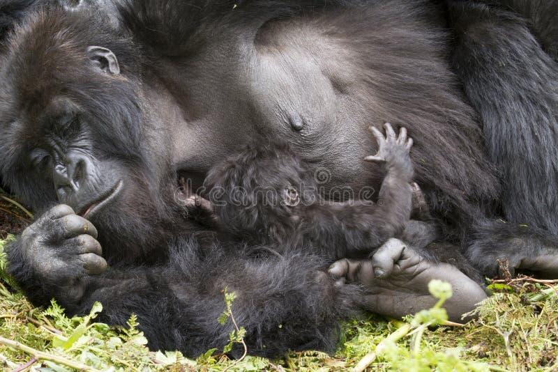 Gorillamama mit Baby lizenzfreies stockbild