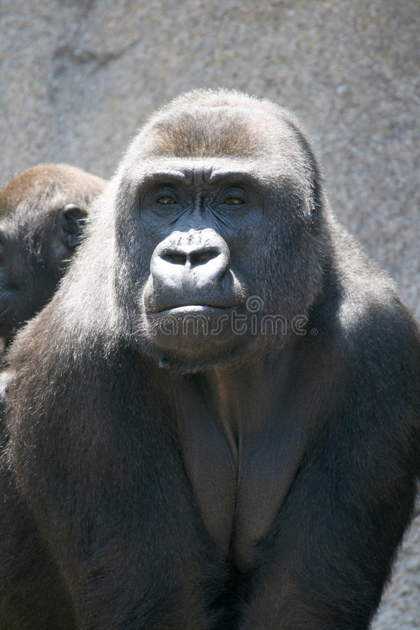 Gorillamutter lizenzfreie stockfotografie