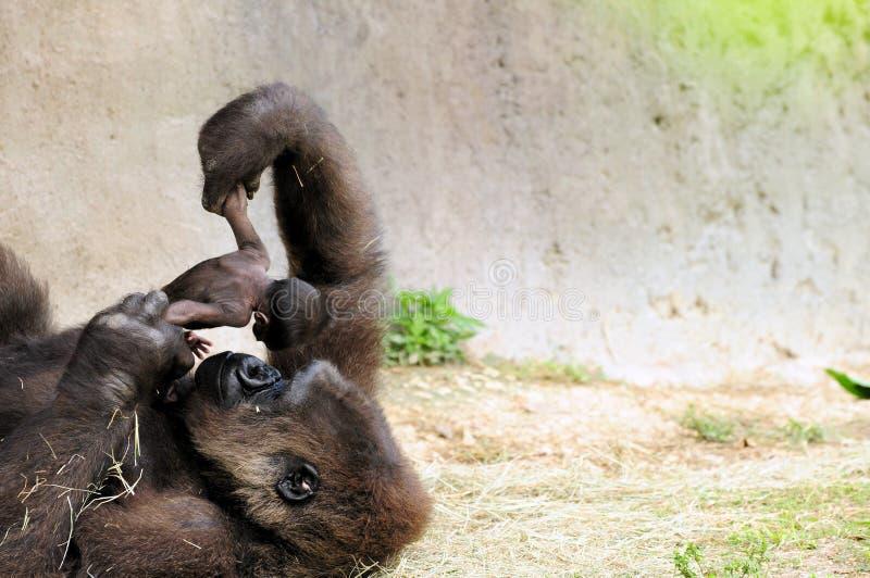 Gorille et chéri images stock
