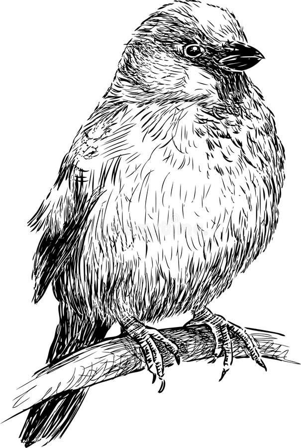 Gorrión stock de ilustración