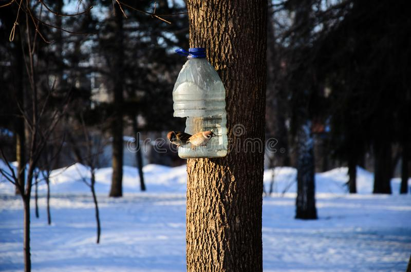 Gorriones grises en un alimentador en un parque fotografía de archivo libre de regalías