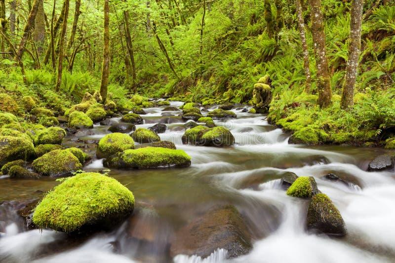 Gorton Creek in the Columbia River Gorge, Oregon, USA. Gorton Creek through lush rainforest in the Columbia River Gorge, Oregon, USA royalty free stock photo
