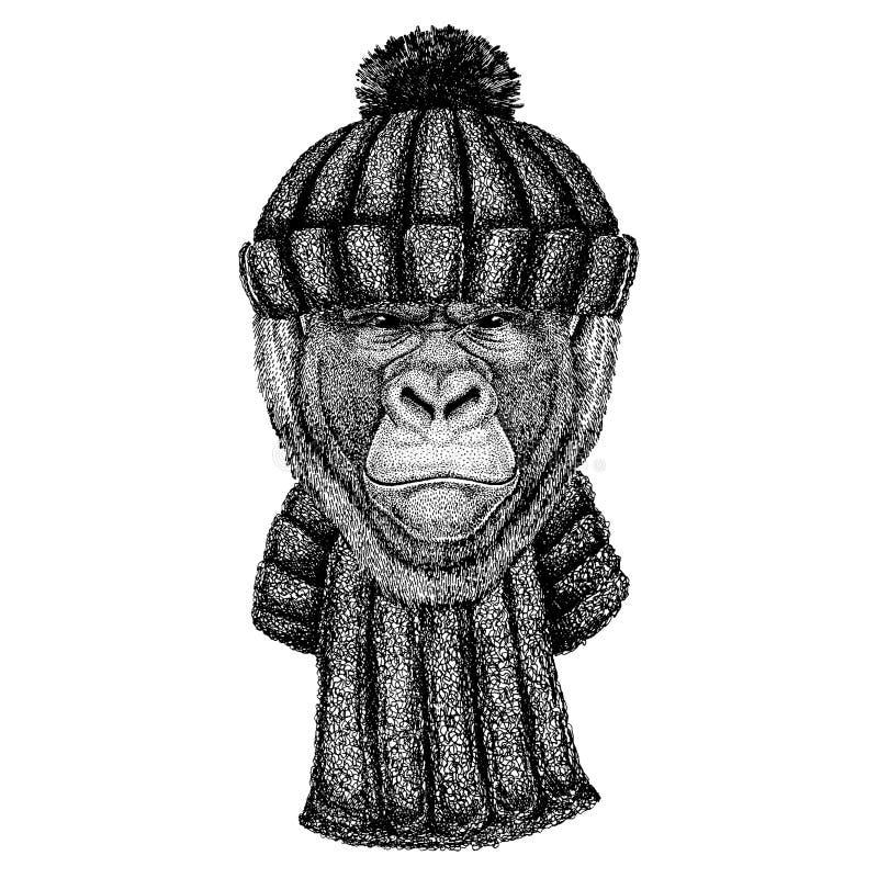 Goryl, małpa, małpuje Chłodno zwierzęcia jest ubranym trykotowego zima kapelusz Ciepła pióropuszu beanie bożych narodzeń nakrętka ilustracji