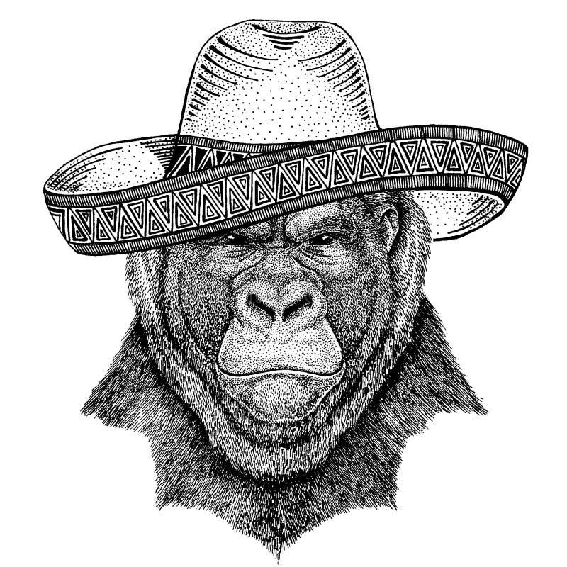Goryl, ma?pa, ma?pa jest ubranym tradycyjnego meksyka?skiego kapelusz Klasyczny pi?ropusz, fiesta, przyj?cie ilustracji