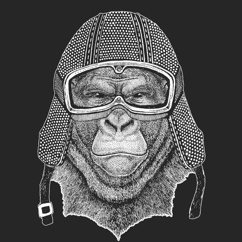 Goryl, małpa, małpa Rocznika motocyklu hemlet Retro stylowa ilustracja z zwierzęcym rowerzystą dla dzieci, dzieciaków odziewać ilustracji