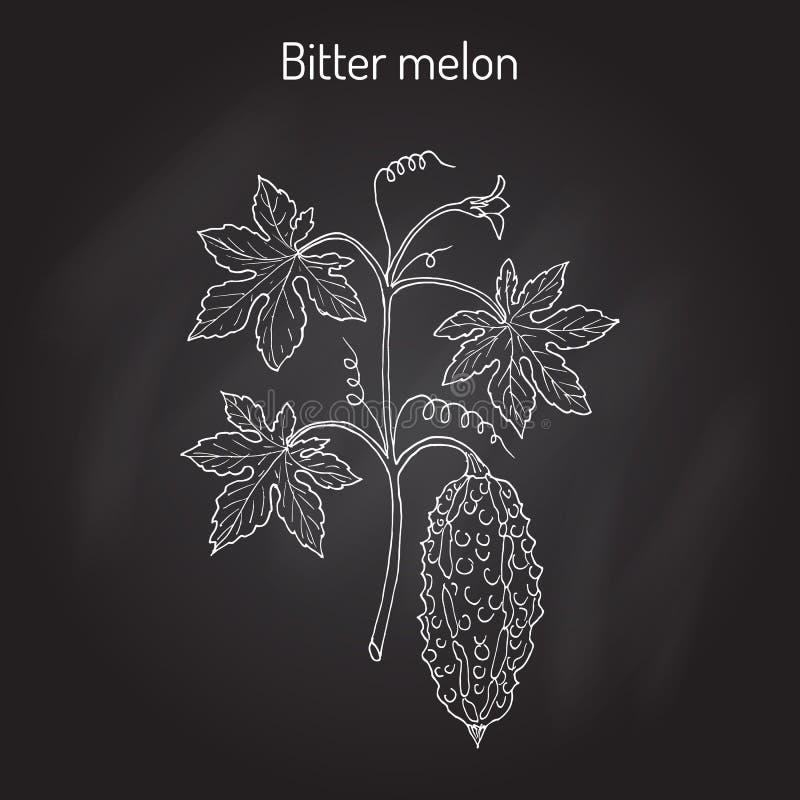 Gorzki melon lub bonkrety Momordica charantia, ilustracji