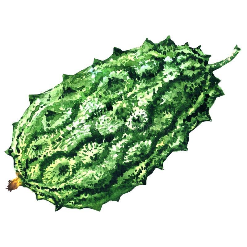 Gorzki melon, zielony momordica, rogaty ogórkowy anguriya, cucumis metuliferus, kiwano, odizolowywający, akwareli ilustracja ilustracji