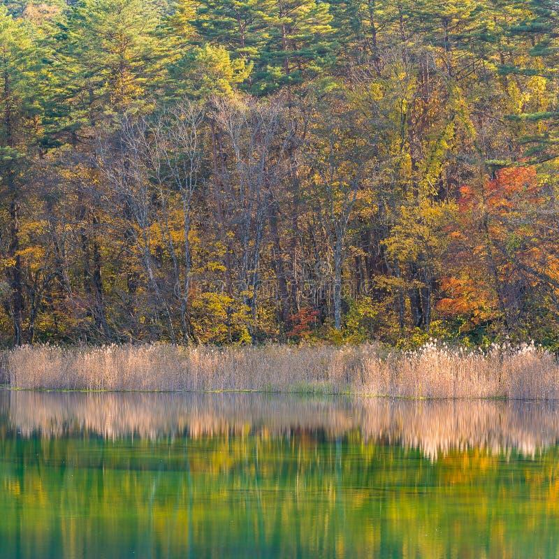 Goshiki-numa Urabandai Fukushima Autumn Japan royalty free stock photos