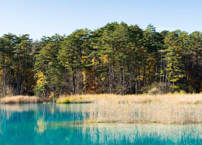 Goshiki-numa Urabandai Fukushima jesień Japonia obrazy royalty free