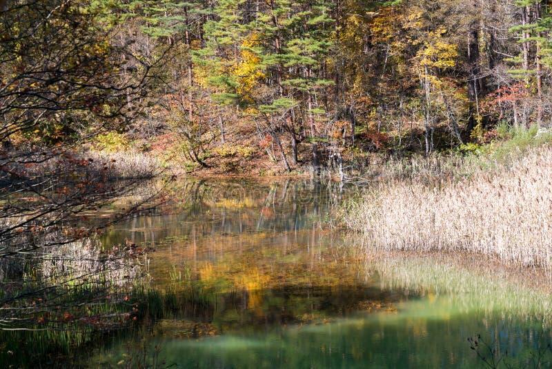 Goshiki-numa Urabandai Fukushima jesień Japonia obrazy stock