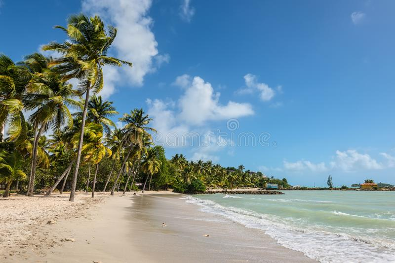 The Gosier in Guadeloupe - paradise tropical beach and palm tree. Le Gosier, Guadeloupe - December 20, 2016: Paradise tropical beach and palm trees, the Gosier stock image