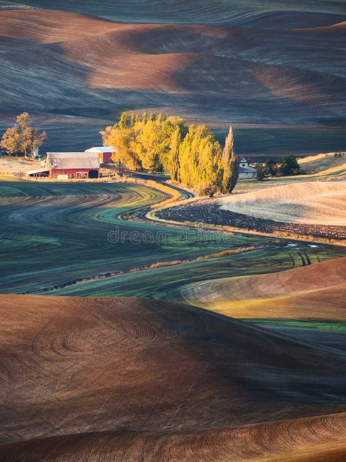 Gospodarstwo rolne zdjęcie stock