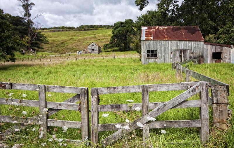 Gospodarstwo rolne, Coromandel Peninsular, NZ obraz stock