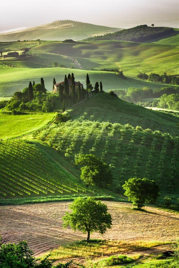 Gospodarstwo rolne oliwni gaje i winnicy zdjęcia royalty free
