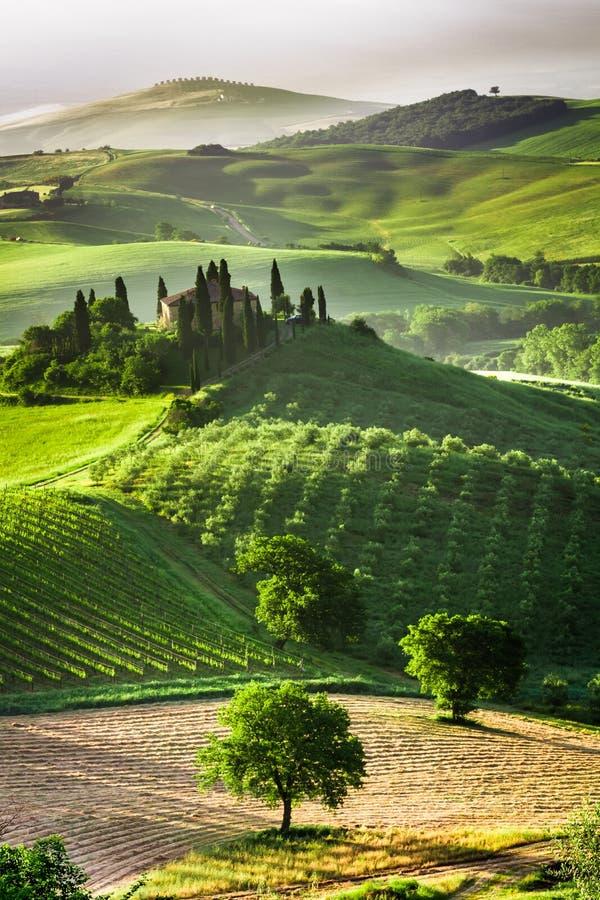 Gospodarstwo rolne oliwni gaje i winnicy obraz stock