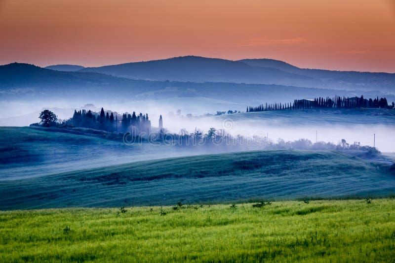 Gospodarstwo rolne oliwni gaje i winnicy w mgłowym wschodzie słońca fotografia royalty free