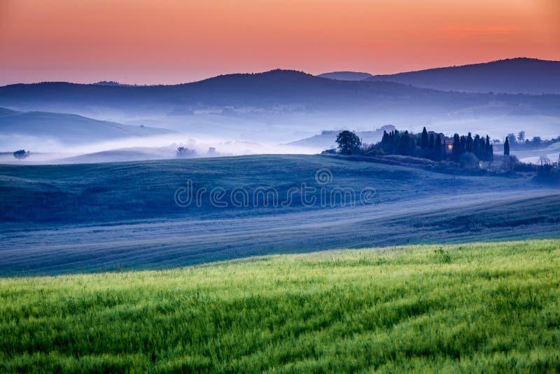 Gospodarstwo rolne oliwni gaje i winnicy w mgłowym wschodzie słońca zdjęcie stock